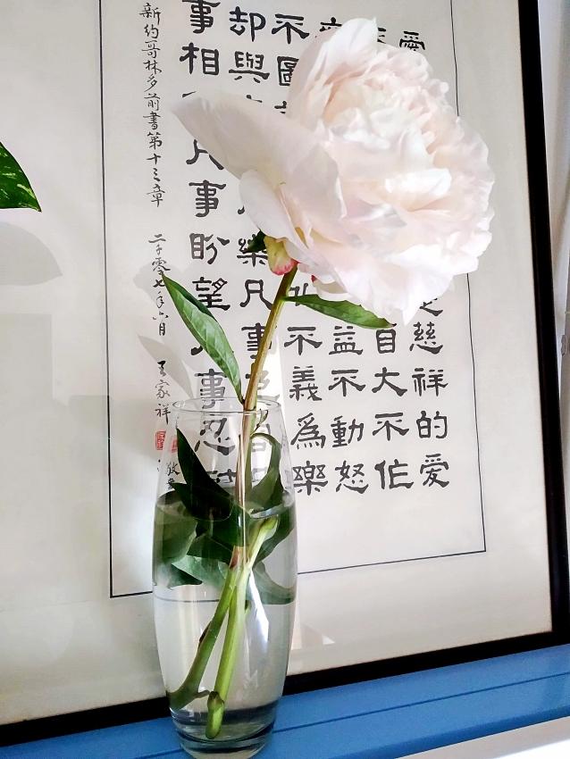 ruža za veb
